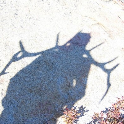 Harvested Elk Horn Shadow - Selway Bitteroot Wilderness